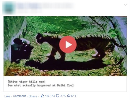 White Tiger Mauls Youth to death at Delhi Zoo video